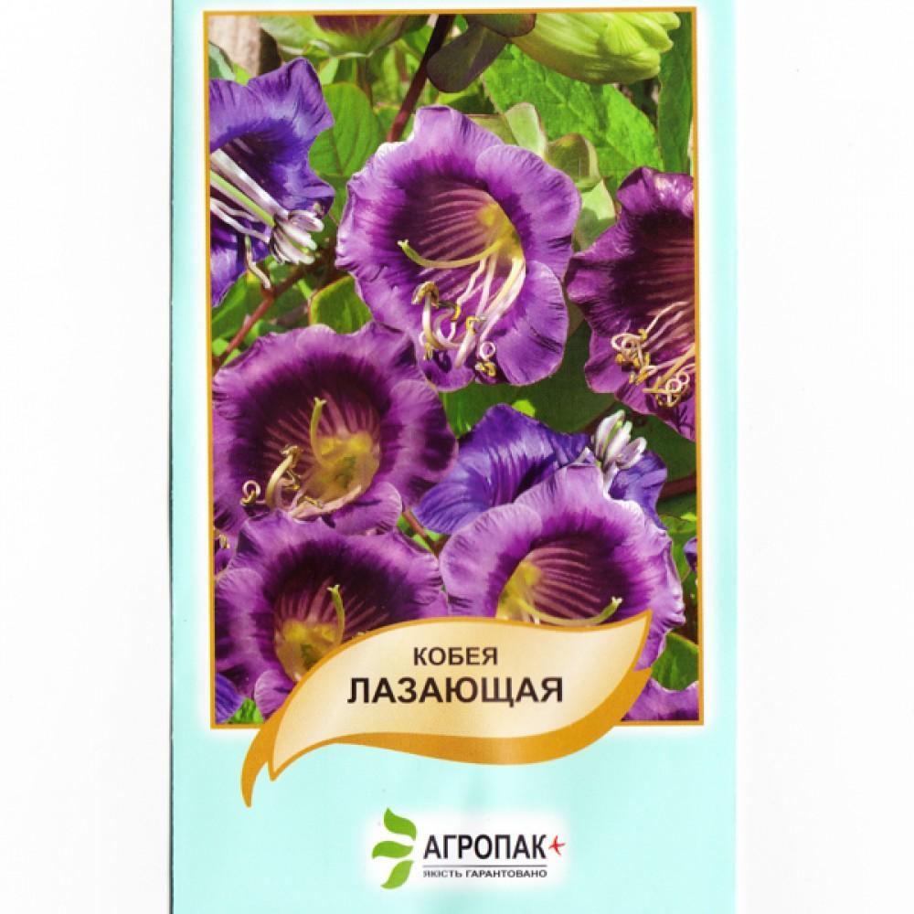 Кобея Повзуча Фіолетова 10 шт (насіння)