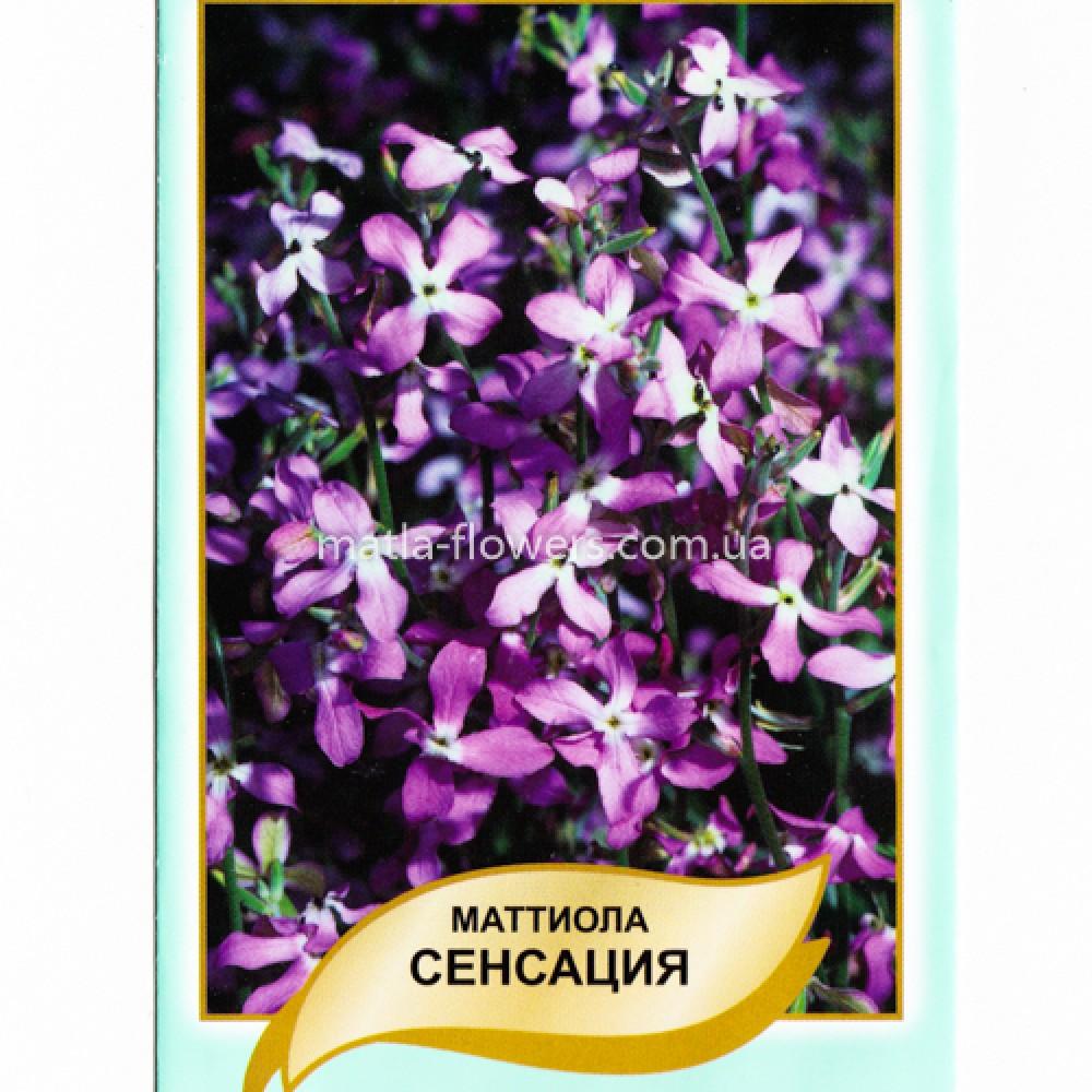 Матіола Дворога Сенсація 0,5 г (насіння)