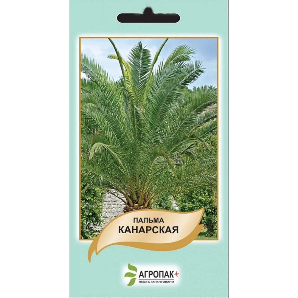 Пальма Канарська 5 шт (насіння)