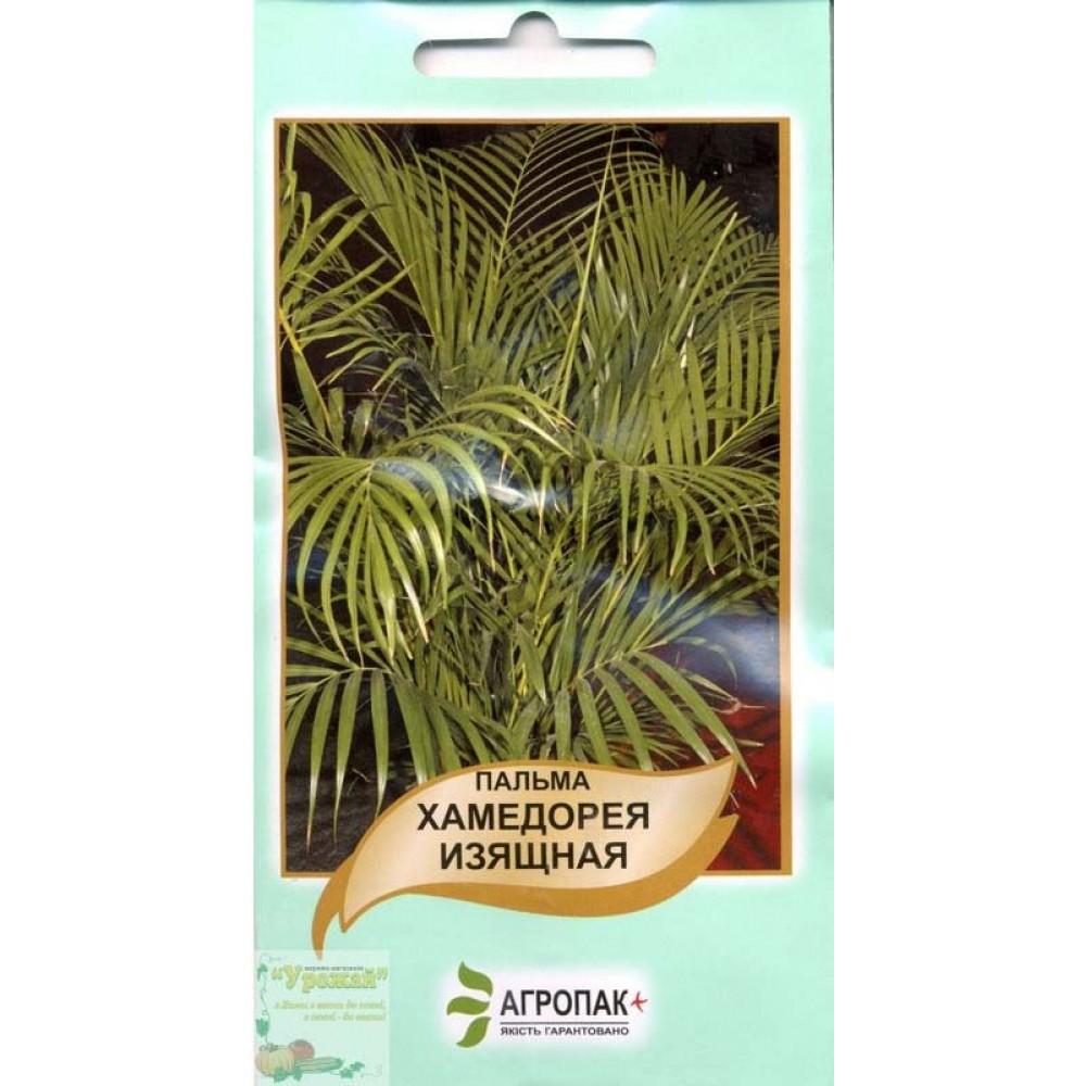Пальма Хамедорея 5 шт (насіння)