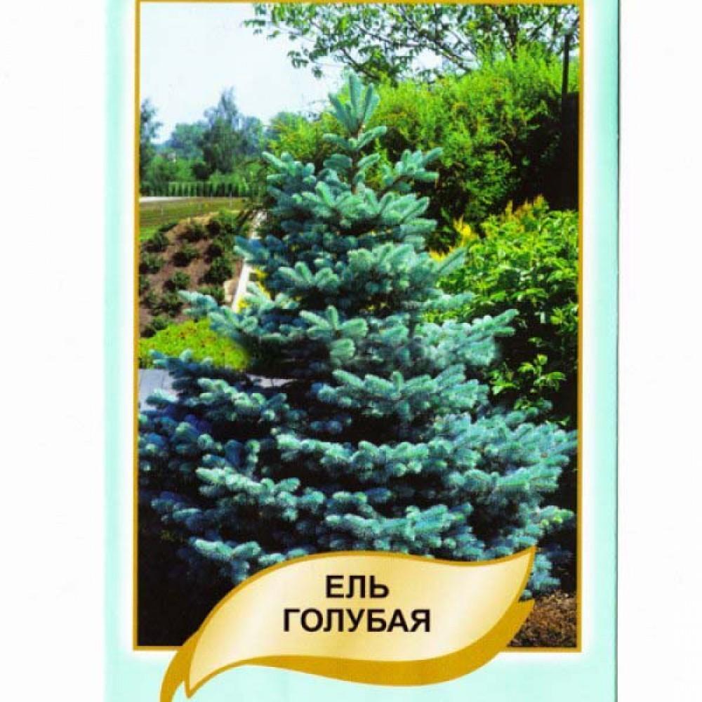 Ялина Блакитна 0,1 г (насіння)