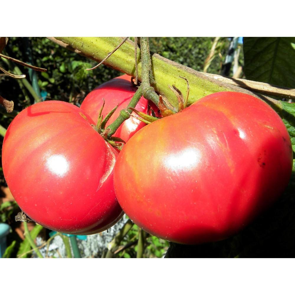 Помідор Малиновий дзвін 0,1 г (насіння)