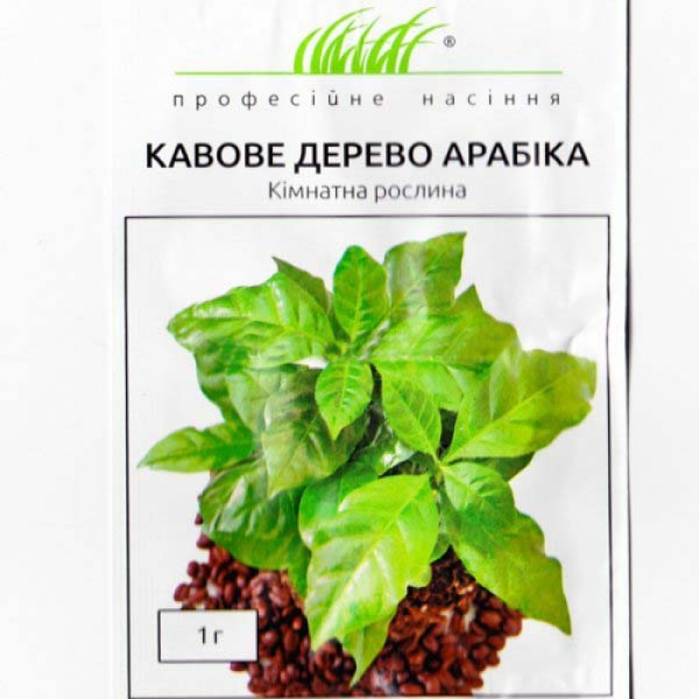 Кавове дерево Арабіка 1 г (насіння)