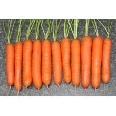 Морква Монанта рання 1г