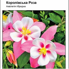 Аквилегия Королевская Роза смесь 0,1 г
