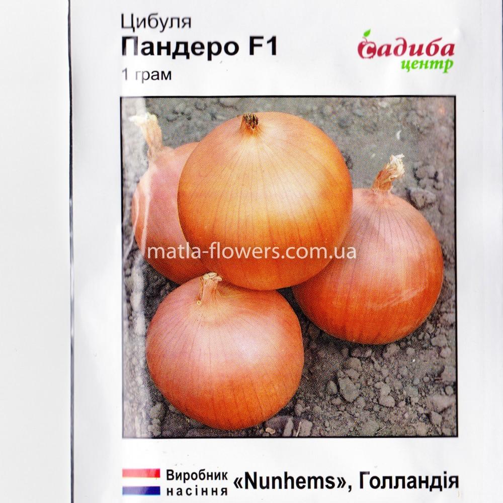 Цибуля Пандеро F1 золотиста 1 г (насіння)