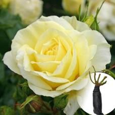 Троянда Limona