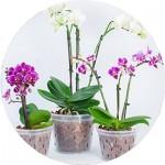 Вазони для орхідей