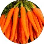 Насіння моркви (24)