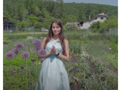 Видео: Аллиум декоративный лук