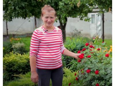 Видео: Болезни роз и их лечение