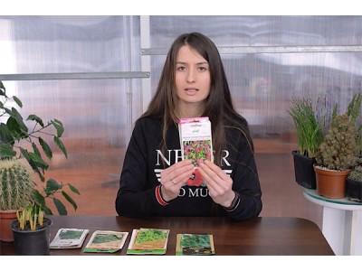 Видео: 5 видов зелени, которые стоит выращивать дома