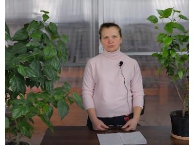 Видео: Гибискус комнатный или китайская роза