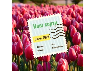 Новинки каталогу тюльпанів Осінь-2020 на які слід звернути увагу