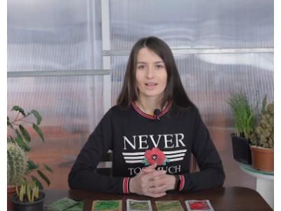 Видео: ТОП 5 многолетних растений антисептиков