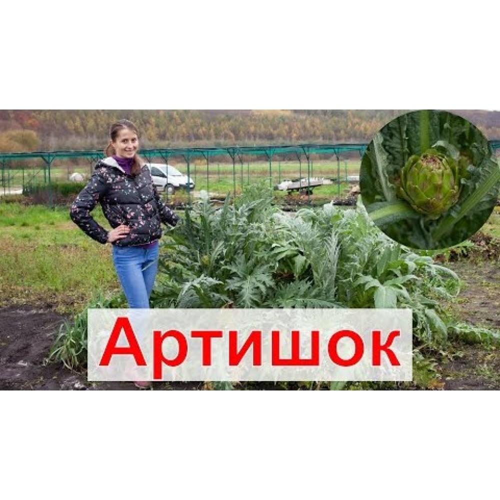 Артишок Зелений глобус 0.5 г (насіння)