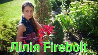 Лілія Firebolt