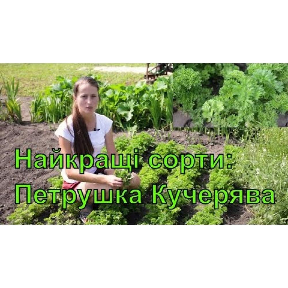 Петрушка Кучерява 1 г