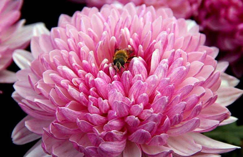 Image result for фото золотой цветок