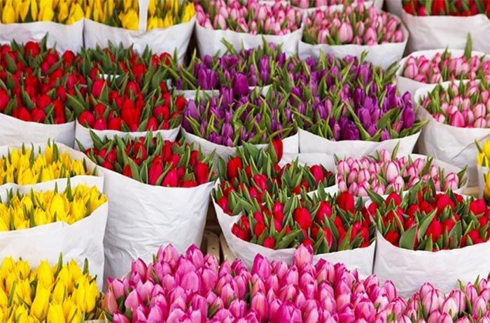 Тюльпани зріз